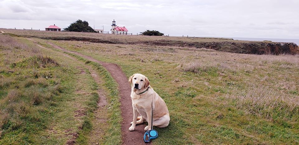 Sueann-Horvat-rio-dog-trails-lighthouse
