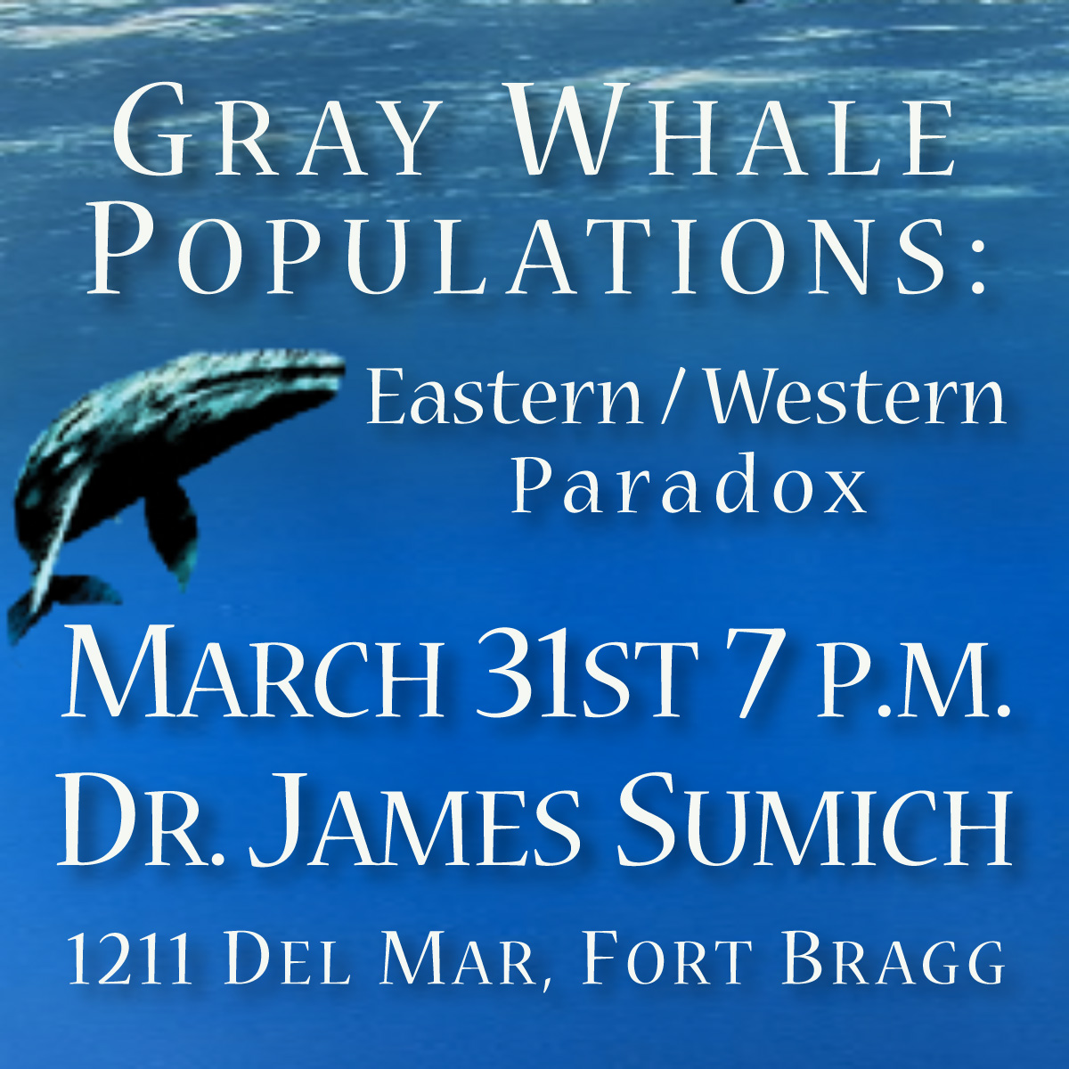 Learn About Whales!